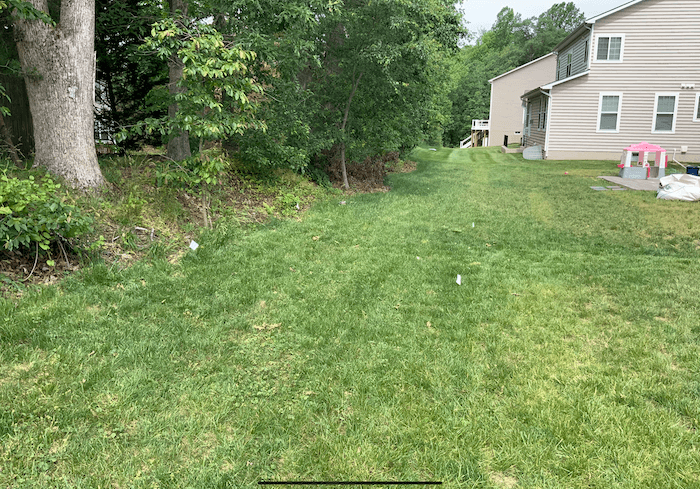 Backyard Before - Waldorf Project